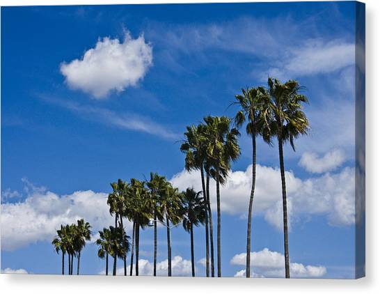 Palm Trees In San Diego California No. 1661 Canvas Print