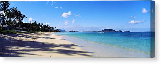 Beach Cliffs Canvas Print - Palm Trees On The Beach, Lanikai Beach by Panoramic Images