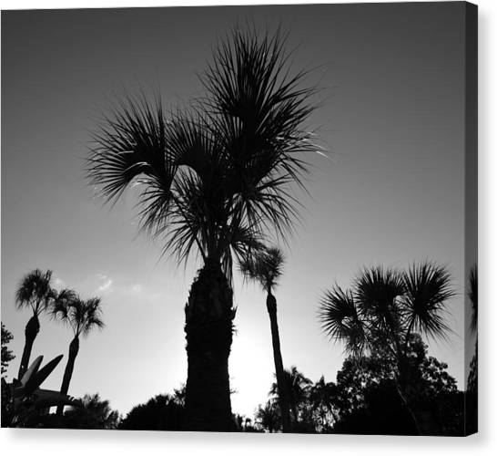 Palm Trees Reach For The Sky Canvas Print