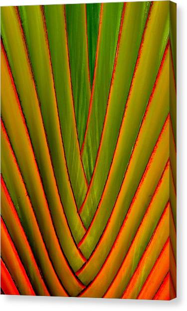 Palm Weave Fine Canvas Print