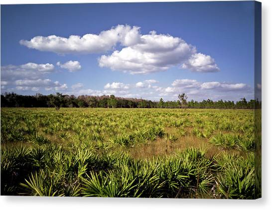 Palmetto Field. Three Lakes W.m.a. Canvas Print