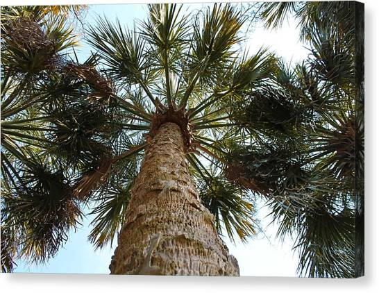 Palms Above Canvas Print