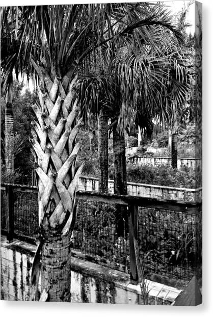 Palms And Walls In Black And White Canvas Print