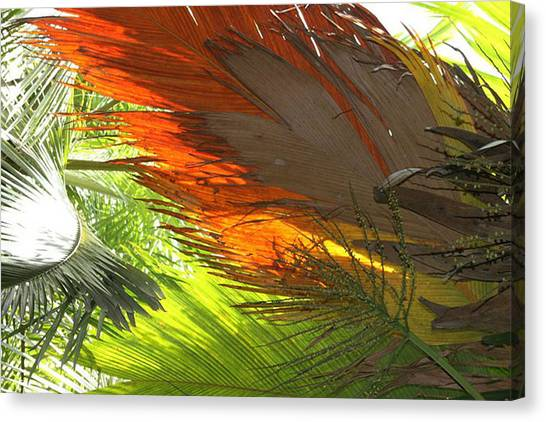 Canvas Print featuring the photograph Palms by Debbie Cundy