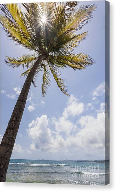 Canvas Print featuring the photograph Palms Trees Along Luquillo Beach In Puerto Rico by Bryan Mullennix