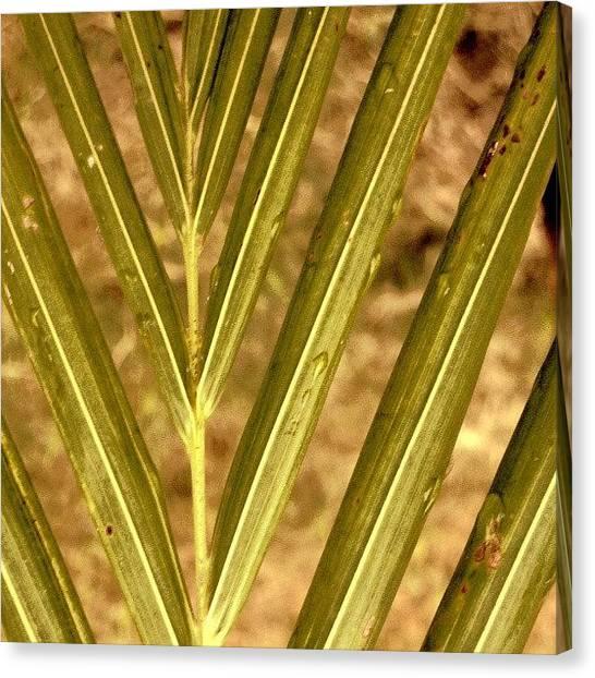Ocean Sunrises Canvas Print - #palmtree #beautiful #love #sky #tree by Juan Parafiniuk