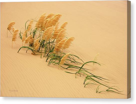 Dunes Canvas Print - Pampas Grass In Sand Dune by Carl Bostek