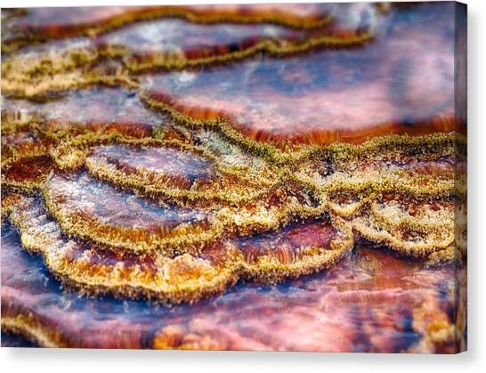 Pancakes Hot Springs Canvas Print