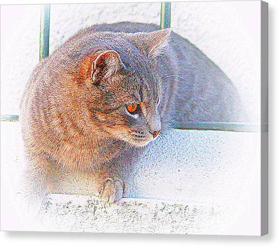 Pancho On The Roof Terrace Canvas Print