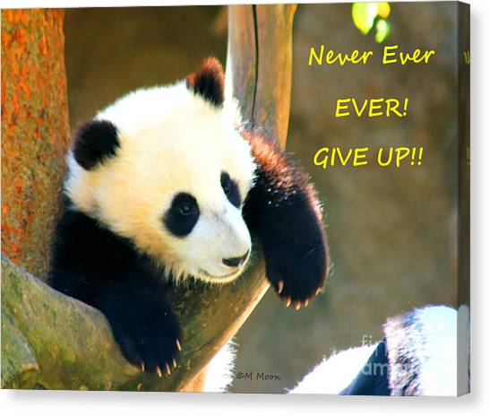 Panda Baby Bear Never Ever Ever Give Up Canvas Print