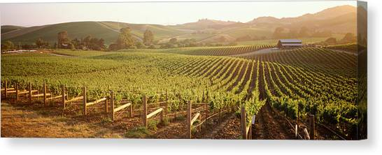 Vineyard In Napa Canvas Print - Panoramic View Of Vineyards, Carneros by Panoramic Images