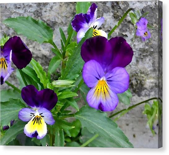 Pansies - Painterly Canvas Print
