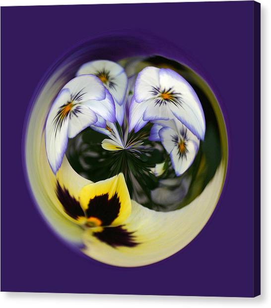 Pansy Ball Canvas Print