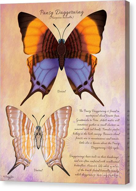 Pansy Daggerwing Butterfly Canvas Print by Tammy Yee
