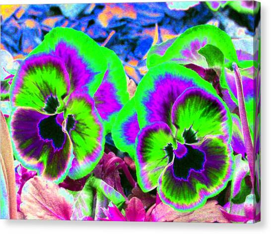 Pansy Power 60 Canvas Print