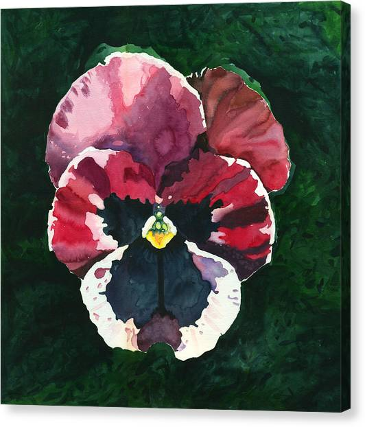 Pansy Red Canvas Print