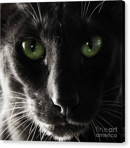 Panther Eyes Canvas Print
