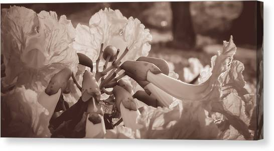 Paper Flowers - Sepia  Canvas Print