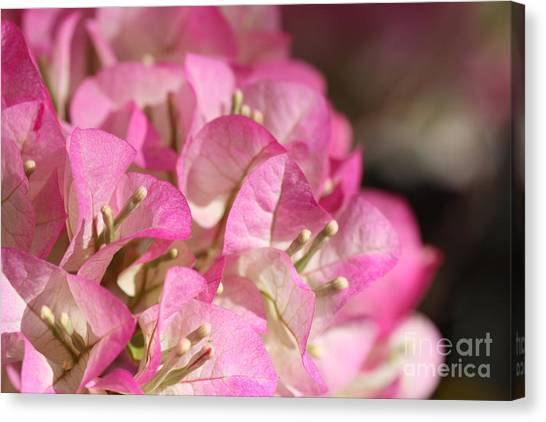 Papery In Pink Canvas Print