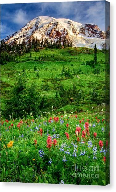 Mount Rainier Canvas Print - Paradise by Inge Johnsson