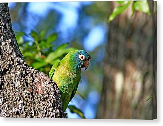 Parakeet In The Park Canvas Print