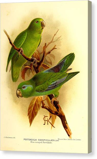 Parakeets Canvas Print - Parakeet by Dreyer Wildlife Print Collections