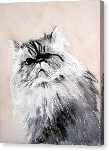 Himalayan Cats Canvas Print - Pardon Me by Betty-Anne McDonald