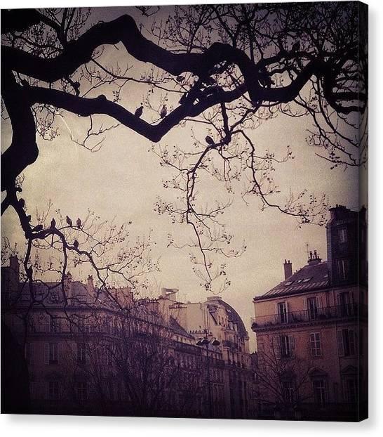 Dove Canvas Print - Paris by Eyjolfur Eyjolfsson
