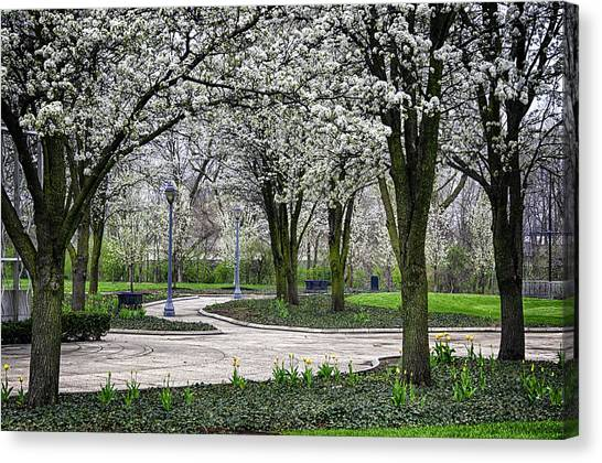 Park Blossoms Canvas Print