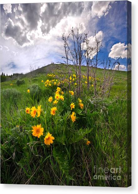 Park City Slopes In Spring Canvas Print by Matt Tilghman