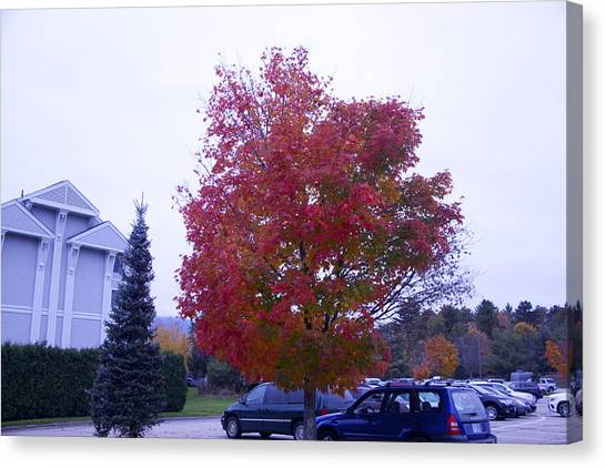 Parked Under Red Tree Canvas Print by Dick Willis