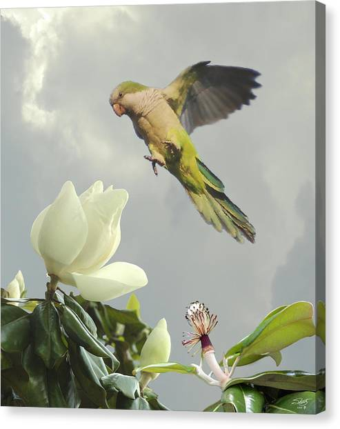 Parrot And Magnolia Tree Canvas Print