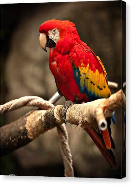 Parrot Canvas Print by Kerri Garrison