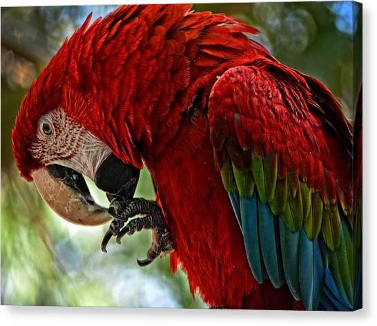 Parrot Preen Hdr Canvas Print