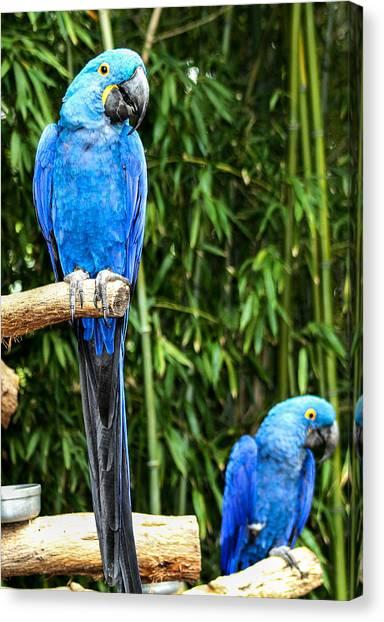 Parroting Parrots Canvas Print