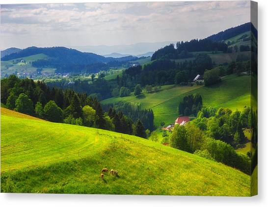 Partly Sunny At Black Forest Canvas Print