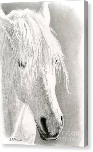 Lovers Drawing Canvas Print - White Horse- Paso Fino by Sarah Batalka