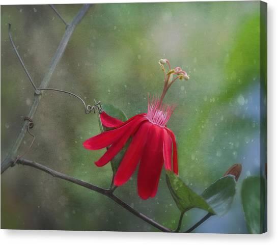 Charming Cottage Canvas Print - Passiflora Flower by Kim Hojnacki