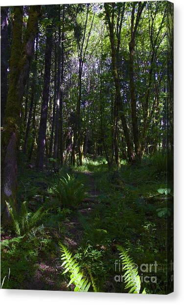 Passing Ferns  Canvas Print by Tim Rice