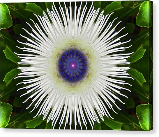 Passion Flower Portal Mandala Canvas Print