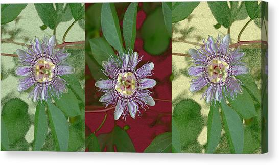 Passion Flower Triptych Canvas Print