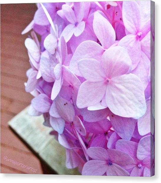 Pastel Canvas Print - Pastel Hydrangea For The #pastel_nio by Anna Porter