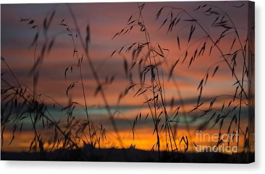 Pastel Moment II Canvas Print