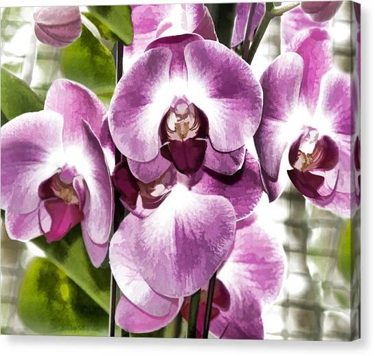 Pastel Orchids Canvas Print
