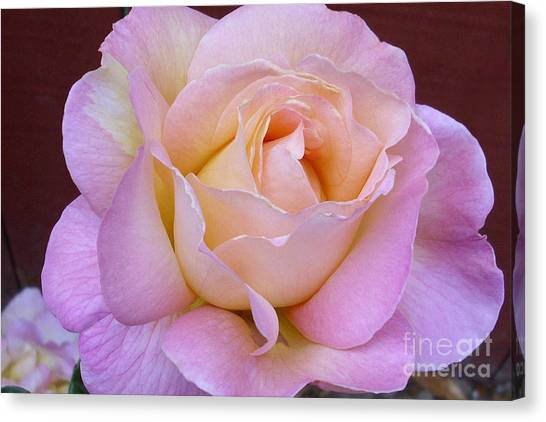 Pastel Rainbow Rose Canvas Print