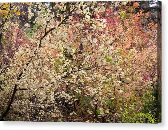 Teton National Forest Canvas Print - Pastel Woodland In Autumn by Kathleen Bishop
