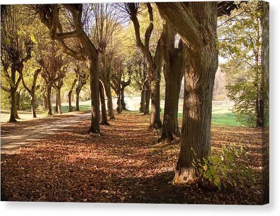 Path 1- Ostromecko Gardens Canvas Print