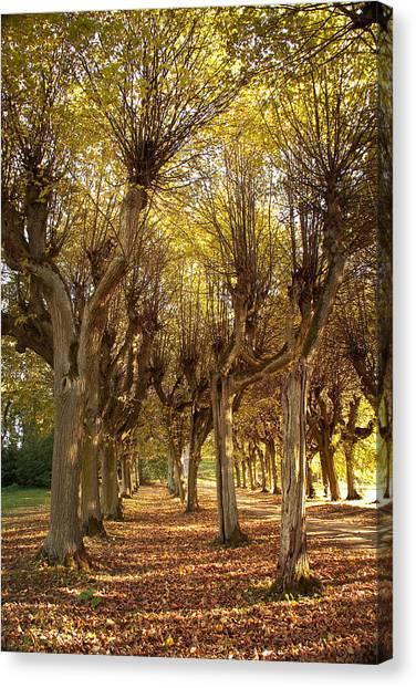 Path 2 - Garden Photography Canvas Print