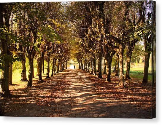Path 3- Ostromecko Gardens Canvas Print
