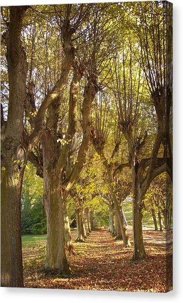 Path 4- Ostromecko Gardens Canvas Print